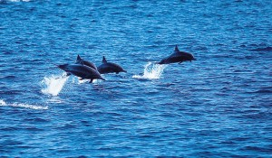 Catalina Island — Fauna