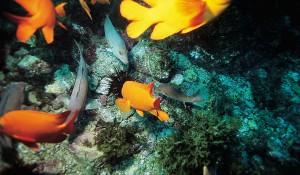 Catalina Island — Diving